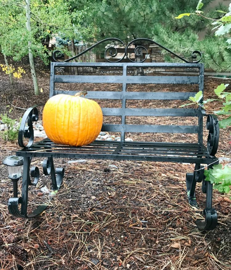 pumpkin-on-a-bench
