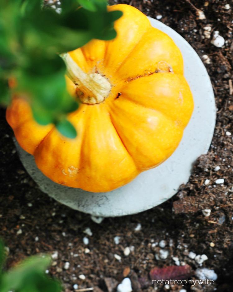 autumn mantel pumpkin