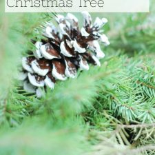 How to Upcycle the Christmas tree in January