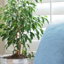 HOW TO MAKE  INDOOR PLANTS LOOK BIGGER
