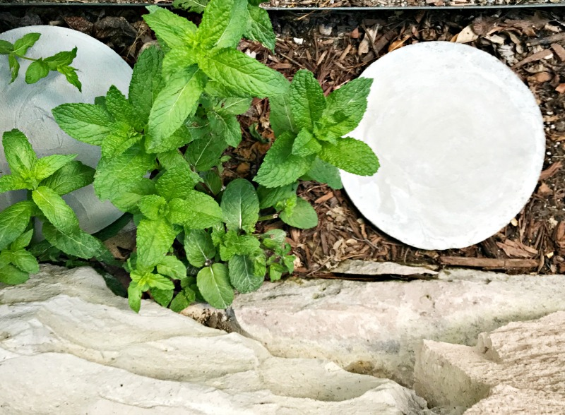 how-to-clean-side-yard