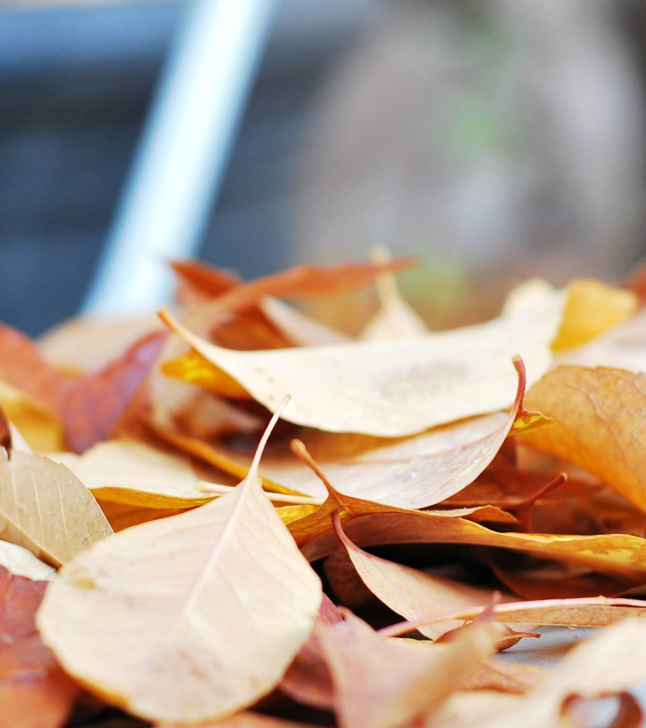 5 ideas to reign in fall decor budget