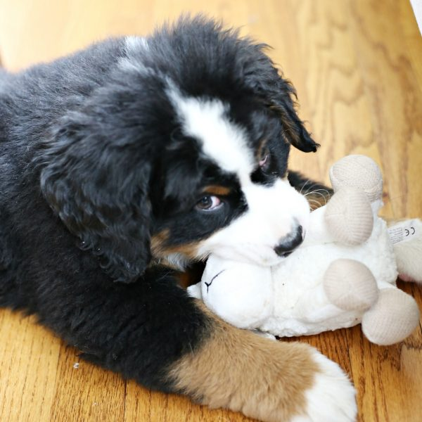 5 DOG ITEMS TO CLEAN MORE OFTEN