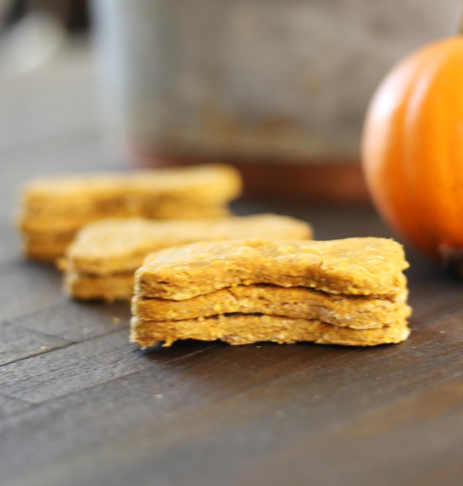 homemade-pumpkin-dog-treats