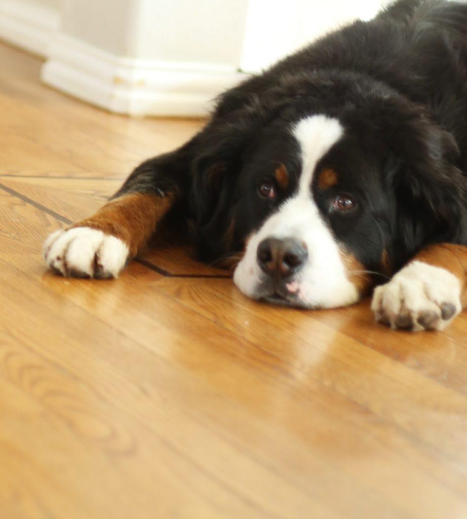 how-to-protect-hardwood-floors