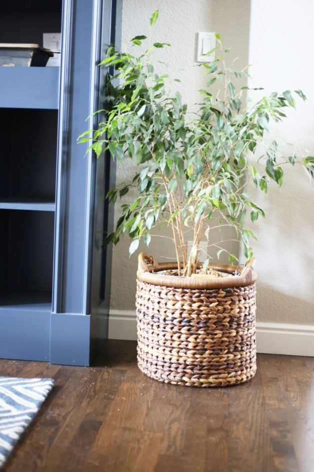 how-to-make-plants-look-bigger